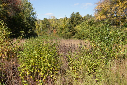 Wellesley Conservation Land, Beautiful Beebe Meadows.